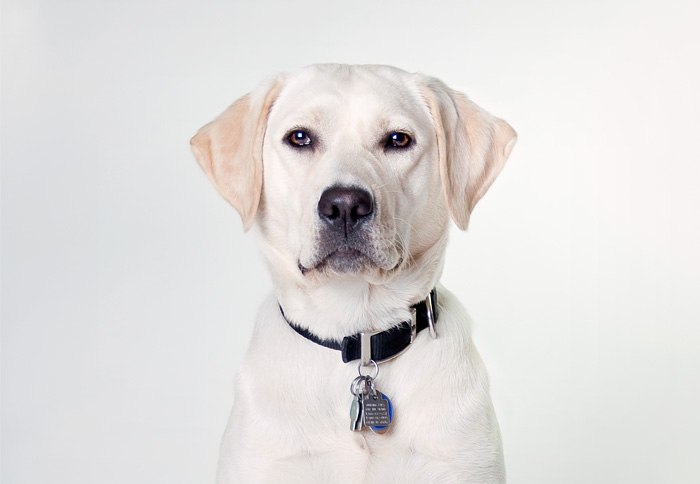 Guiding Eyes for the Blind