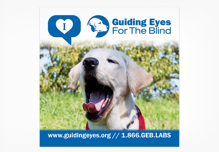 Guiding Eyes For The Blind 171 Jeff Borkowski Project Work